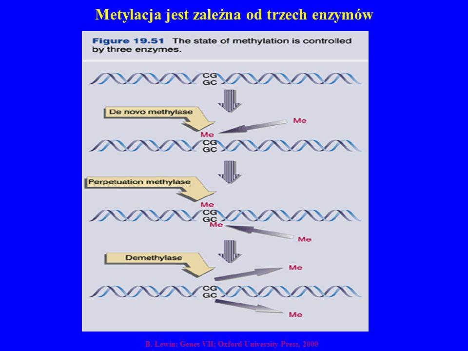 Metylacja jest zależna od trzech enzymów