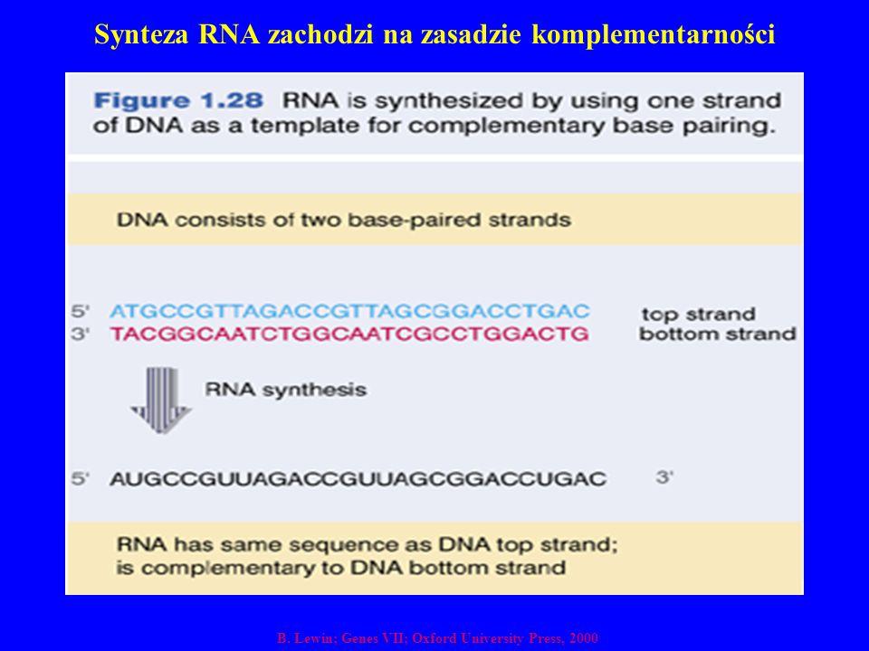 Synteza RNA zachodzi na zasadzie komplementarności
