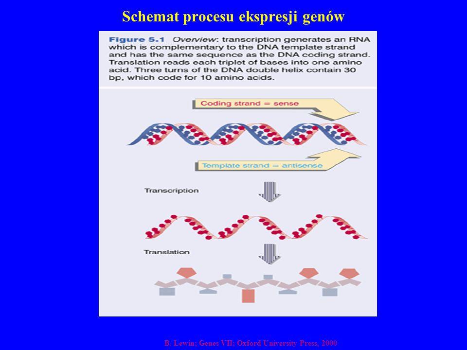 Schemat procesu ekspresji genów