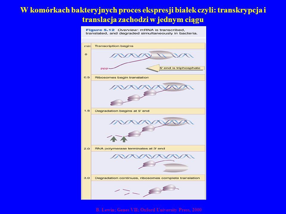 W komórkach bakteryjnych proces ekspresji białek czyli: transkrypcja i translacja zachodzi w jednym ciągu
