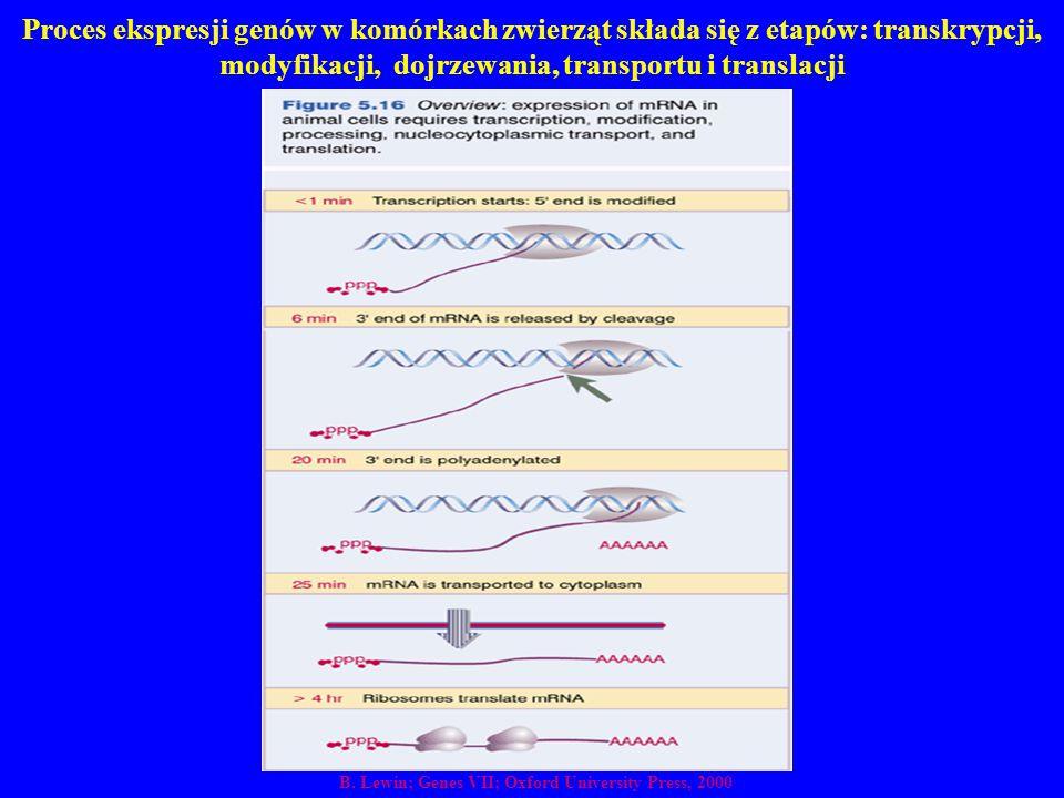 Proces ekspresji genów w komórkach zwierząt składa się z etapów: transkrypcji, modyfikacji, dojrzewania, transportu i translacji