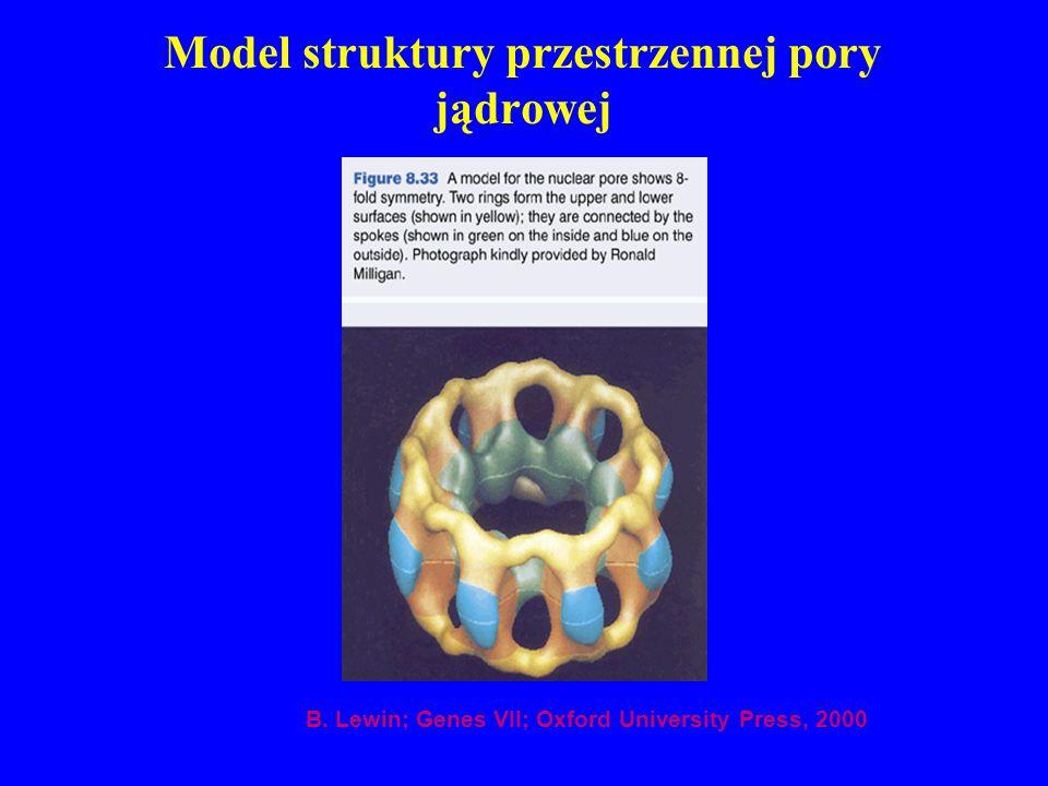 Model struktury przestrzennej pory jądrowej