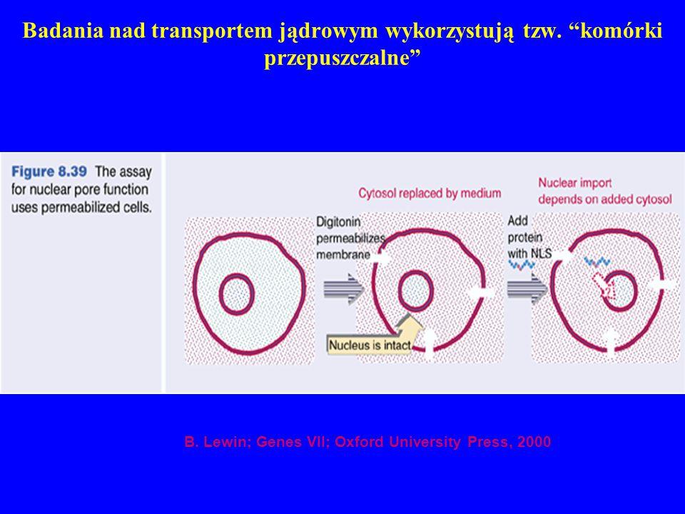 Badania nad transportem jądrowym wykorzystują tzw