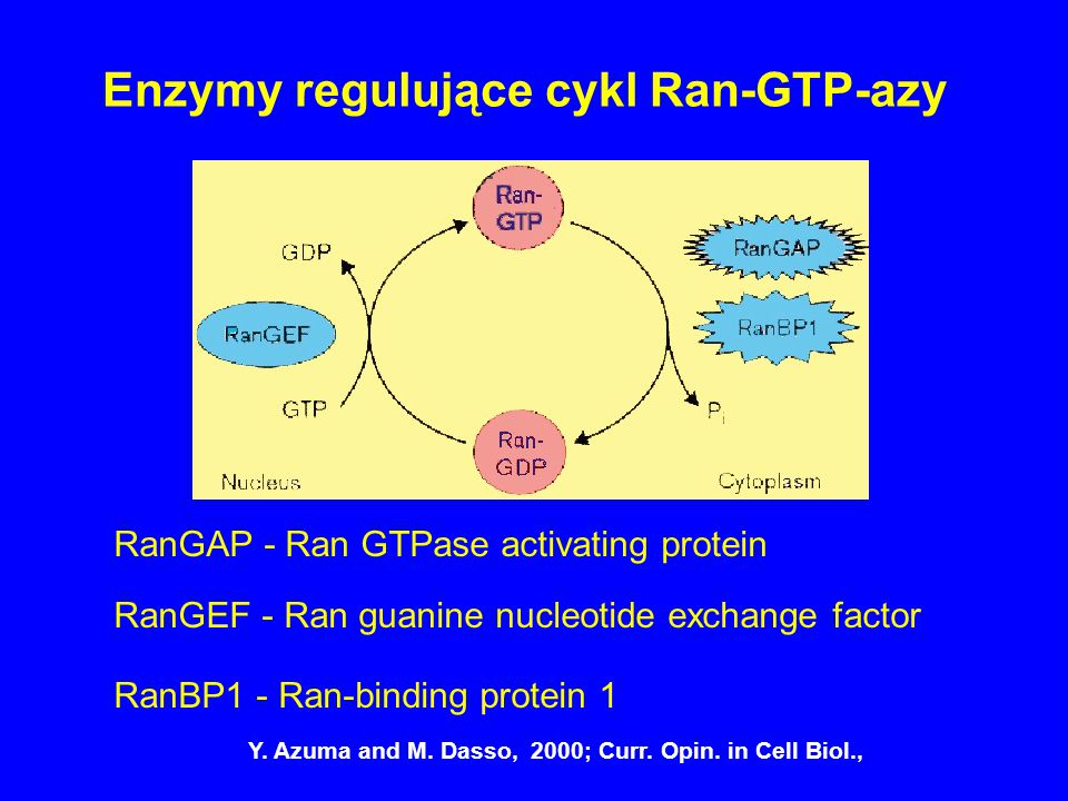 Enzymy regulujące cykl Ran-GTP-azy