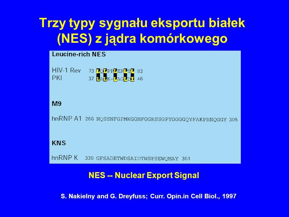 Trzy typy sygnału eksportu białek (NES) z jądra komórkowego