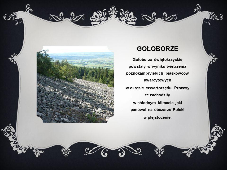 Gołoborze Gołoborza świętokrzyskie powstały w wyniku wietrzenia późnokambryjskich piaskowców kwarcytowych.