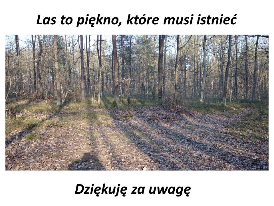 Las to piękno, które musi istnieć