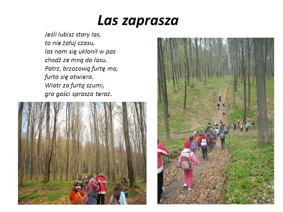 Las zaprasza Jeśli lubisz stary las, to nie żałuj czasu, las nam się ukłonił w pas chodź ze mną do lasu.