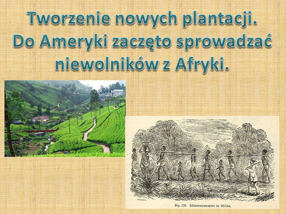 Tworzenie nowych plantacji. Do Ameryki zaczęto sprowadzać