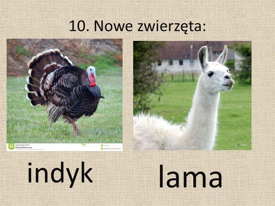 10. Nowe zwierzęta: indyk lama