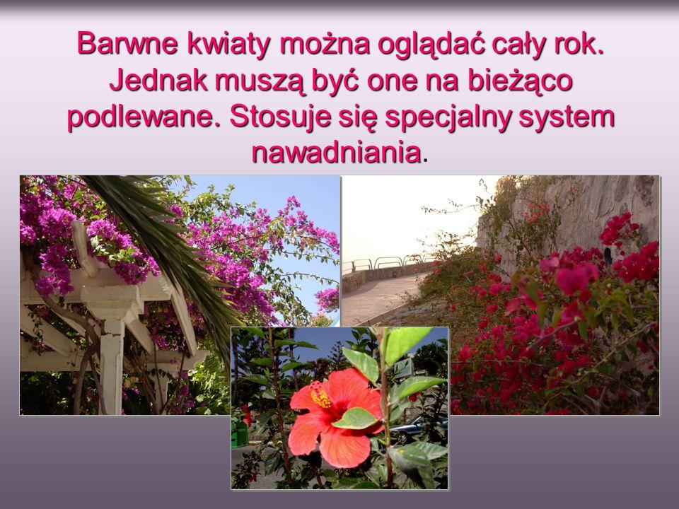 Barwne kwiaty można oglądać cały rok