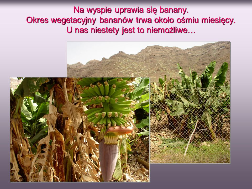 Na wyspie uprawia się banany