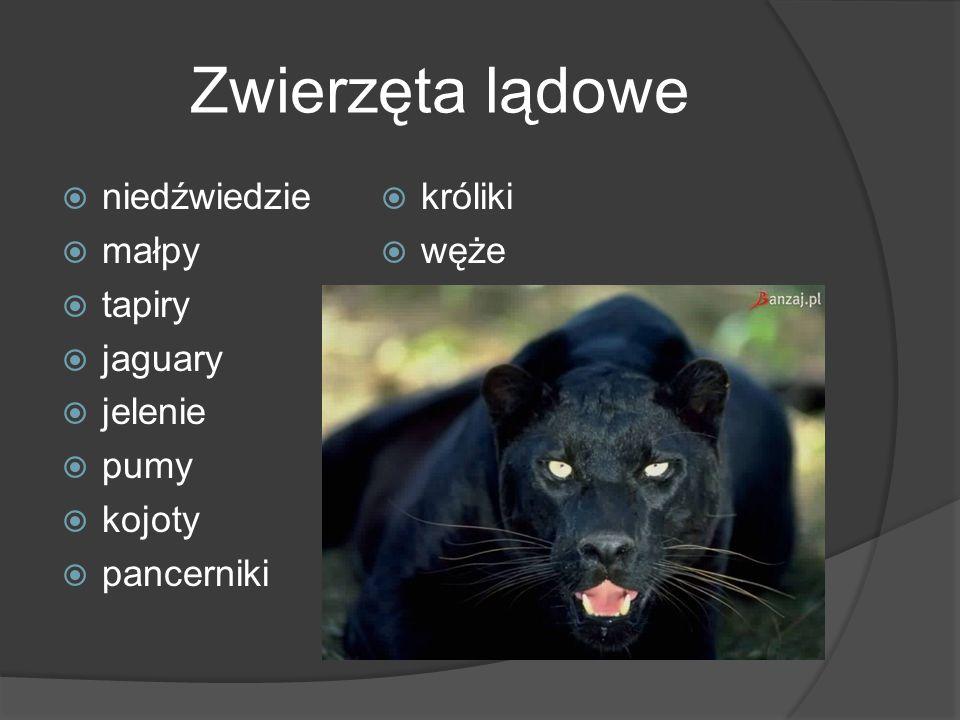 Zwierzęta lądowe niedźwiedzie króliki małpy węże tapiry jaguary