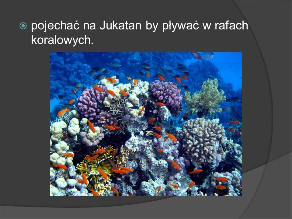 pojechać na Jukatan by pływać w rafach koralowych.