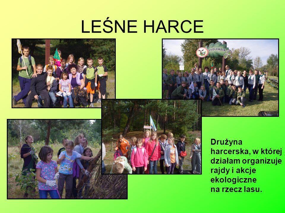 LEŚNE HARCE Drużyna harcerska, w której działam organizuje rajdy i akcje ekologiczne na rzecz lasu.
