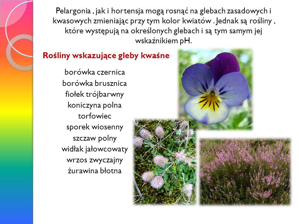 Pelargonia , jak i hortensja mogą rosnąć na glebach zasadowych i kwasowych zmieniając przy tym kolor kwiatów . Jednak są rośliny , które występują na określonych glebach i są tym samym jej wskaźnikiem pH.