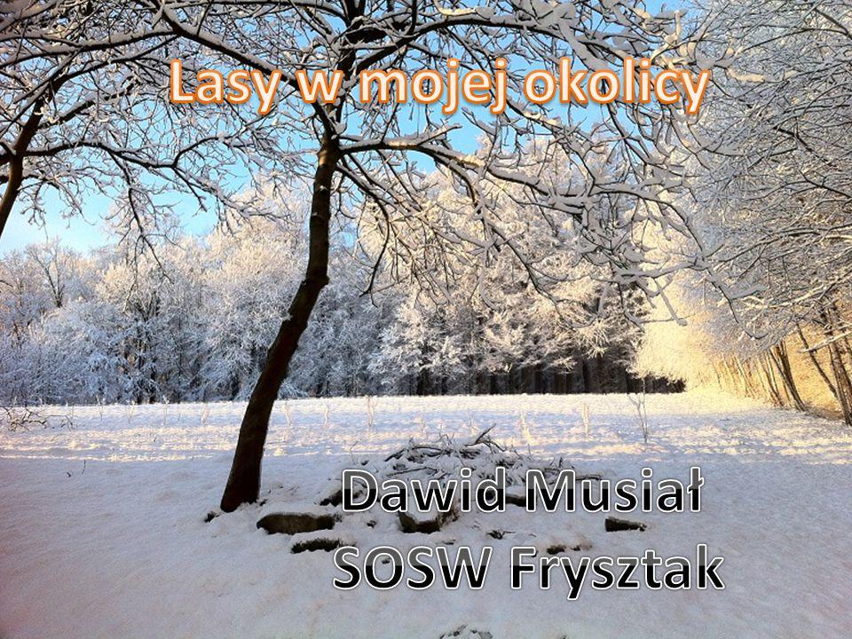 Lasy w mojej okolicy Dawid Musiał SOSW Frysztak