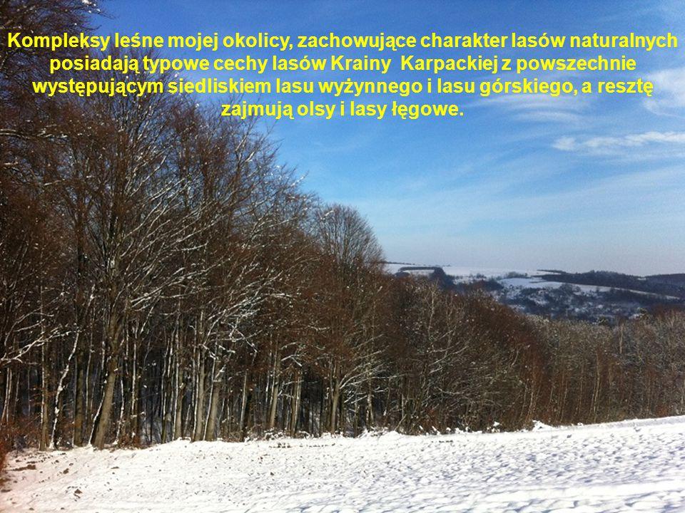 Kompleksy leśne mojej okolicy, zachowujące charakter lasów naturalnych posiadają typowe cechy lasów Krainy Karpackiej z powszechnie występującym siedliskiem lasu wyżynnego i lasu górskiego, a resztę zajmują olsy i lasy łęgowe.