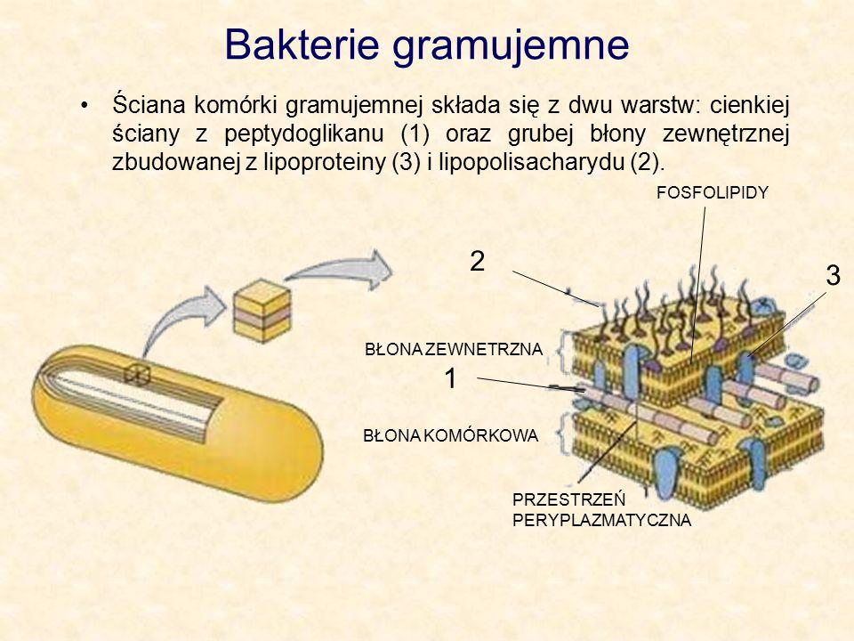 Bakterie gramujemne