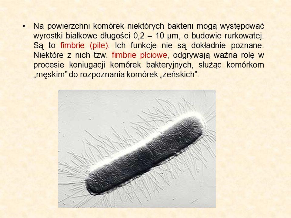 Na powierzchni komórek niektórych bakterii mogą występować wyrostki białkowe długości 0,2 – 10 μm, o budowie rurkowatej.