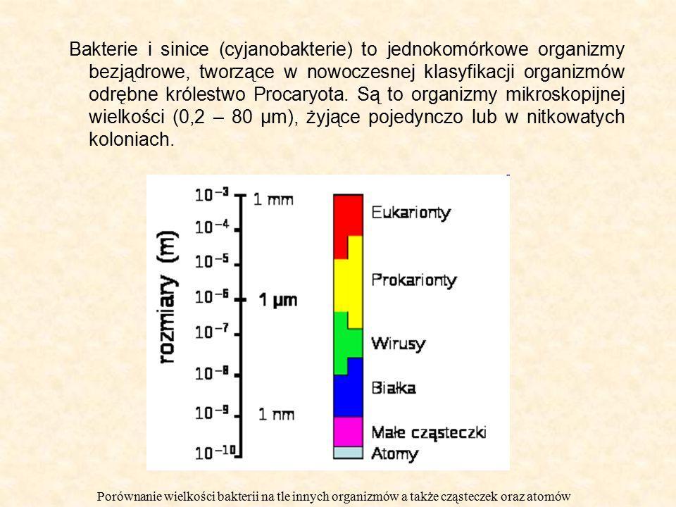 Bakterie i sinice (cyjanobakterie) to jednokomórkowe organizmy bezjądrowe, tworzące w nowoczesnej klasyfikacji organizmów odrębne królestwo Procaryota. Są to organizmy mikroskopijnej wielkości (0,2 – 80 μm), żyjące pojedynczo lub w nitkowatych koloniach.