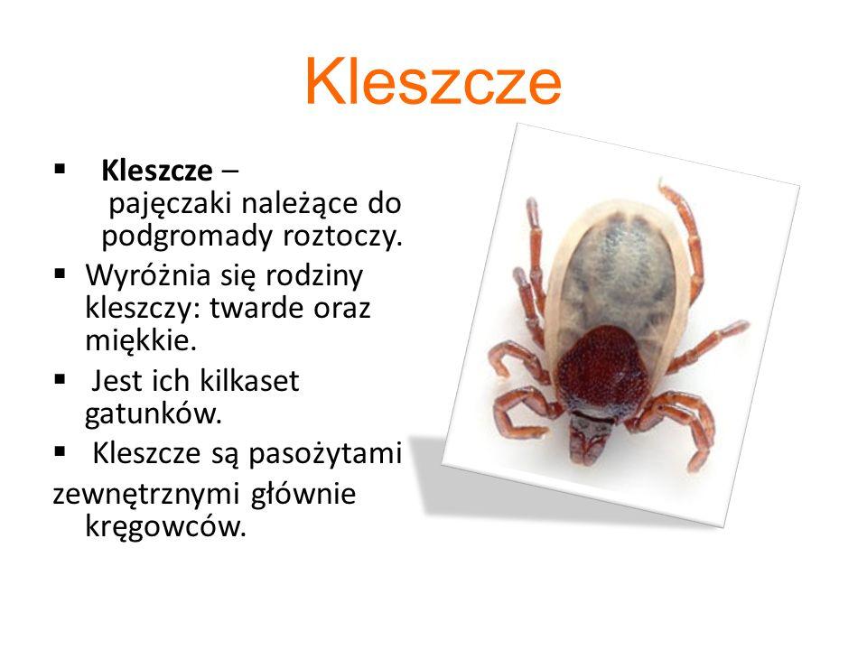 Kleszcze Kleszcze – pajęczaki należące do podgromady roztoczy.