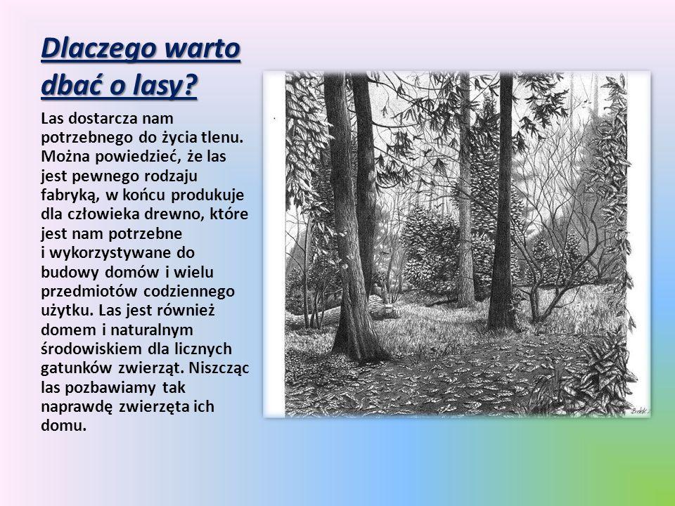 Dlaczego warto dbać o lasy