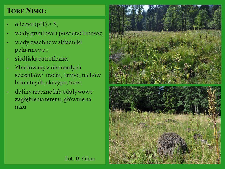 Torf Niski: odczyn (pH) > 5; wody gruntowe i powierzchniowe;