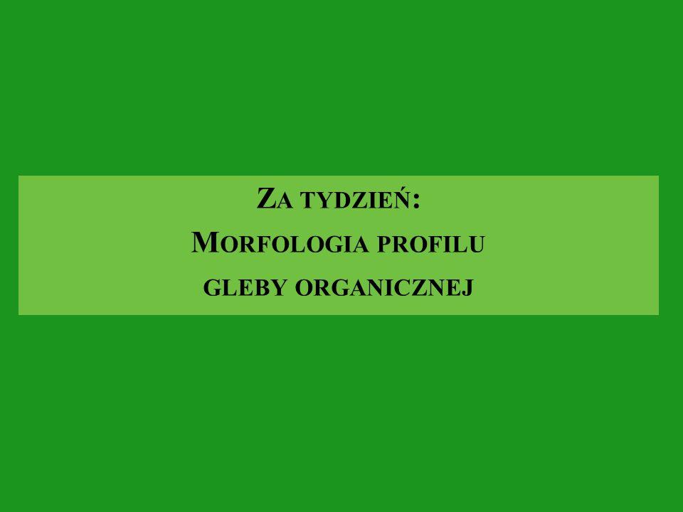 Za tydzień: Morfologia profilu gleby organicznej
