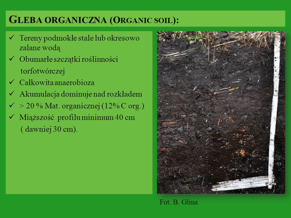 Gleba organiczna (Organic soil):