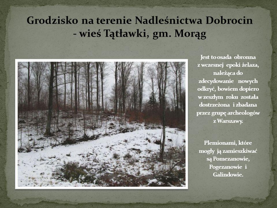 Grodzisko na terenie Nadleśnictwa Dobrocin - wieś Tątławki, gm. Morąg