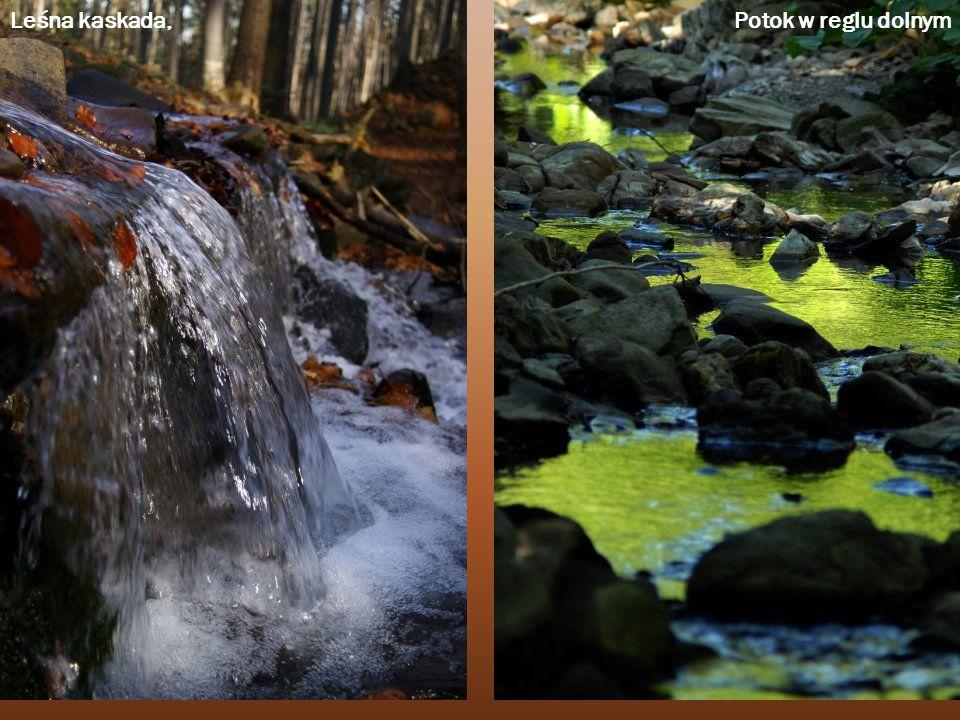 Leśna kaskada, Potok w reglu dolnym