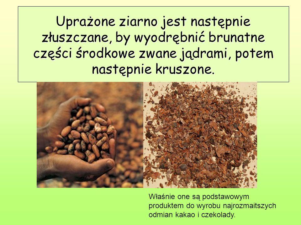 Uprażone ziarno jest następnie złuszczane, by wyodrębnić brunatne części środkowe zwane jądrami, potem następnie kruszone.