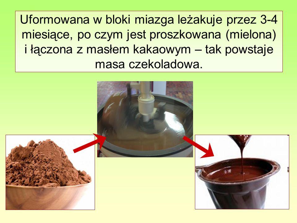 Uformowana w bloki miazga leżakuje przez 3-4 miesiące, po czym jest proszkowana (mielona) i łączona z masłem kakaowym – tak powstaje masa czekoladowa.