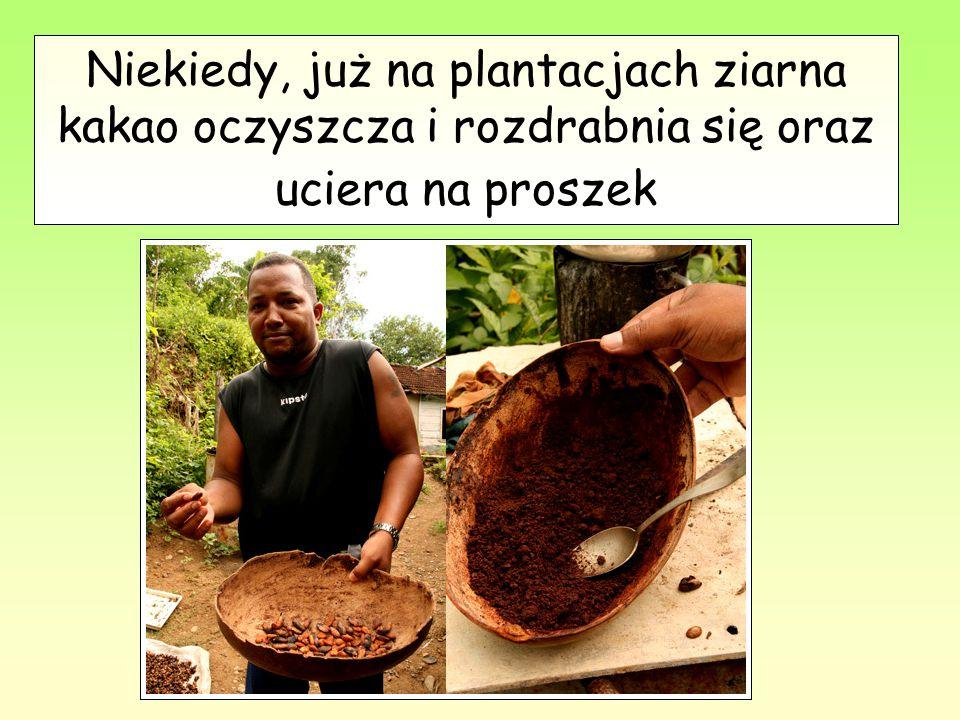 Niekiedy, już na plantacjach ziarna kakao oczyszcza i rozdrabnia się oraz uciera na proszek