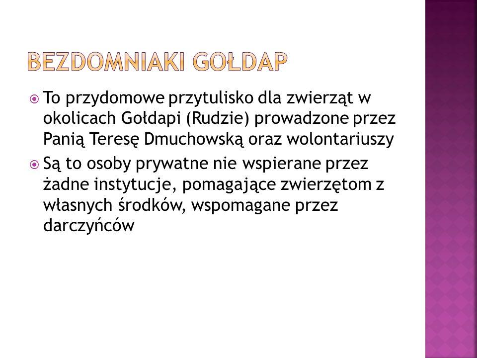 BEZDOMNIAKI Gołdap To przydomowe przytulisko dla zwierząt w okolicach Gołdapi (Rudzie) prowadzone przez Panią Teresę Dmuchowską oraz wolontariuszy.
