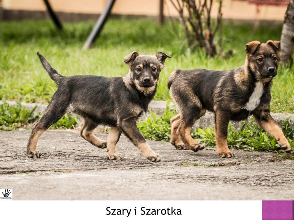 Szary i Szarotka
