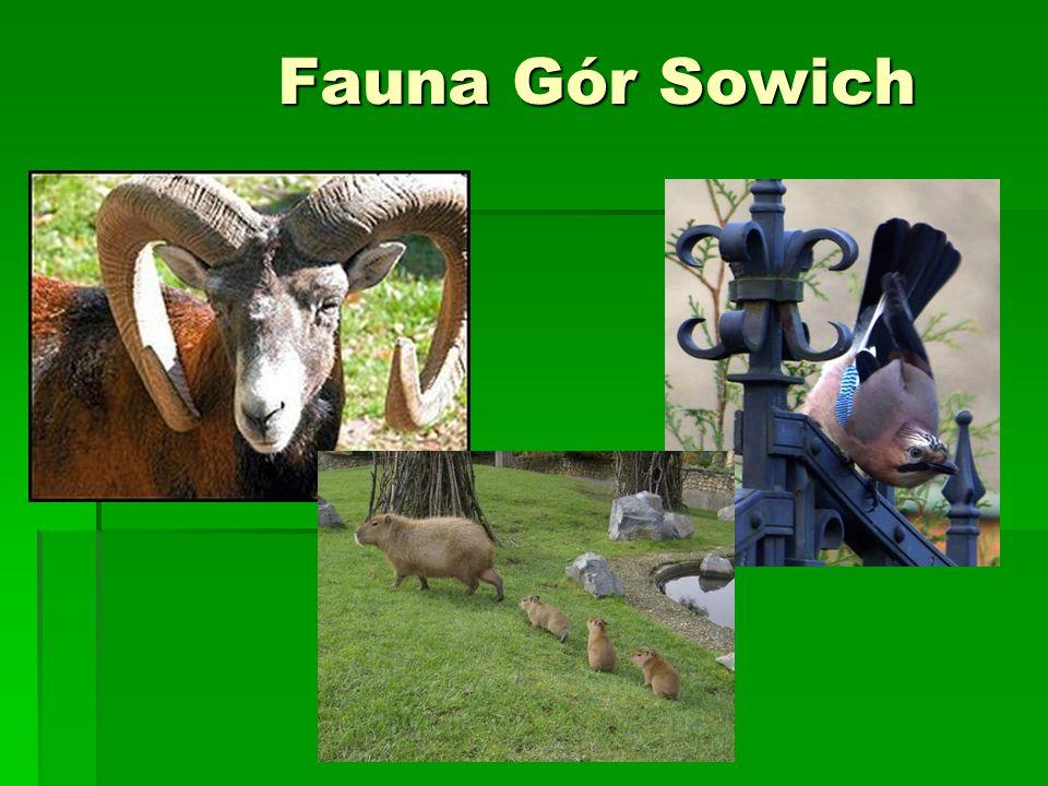 Fauna Gór Sowich
