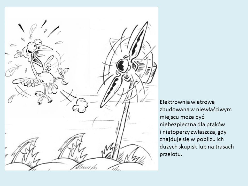 Elektrownia wiatrowa zbudowana w niewłaściwym miejscu może być niebezpieczna dla ptaków