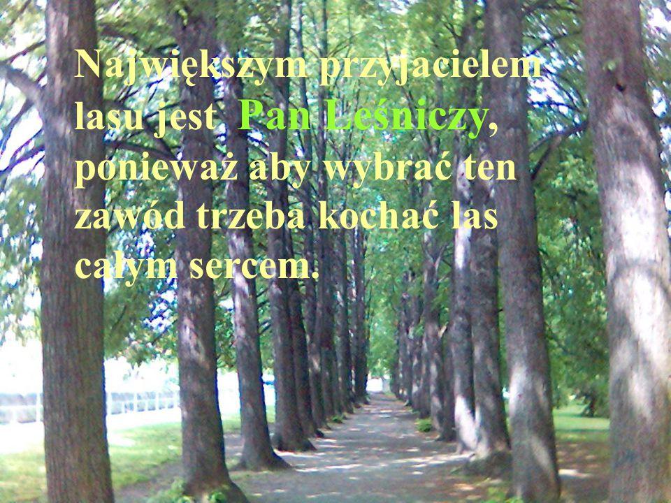 Największym przyjacielem lasu jest Pan Leśniczy, ponieważ aby wybrać ten zawód trzeba kochać las całym sercem.