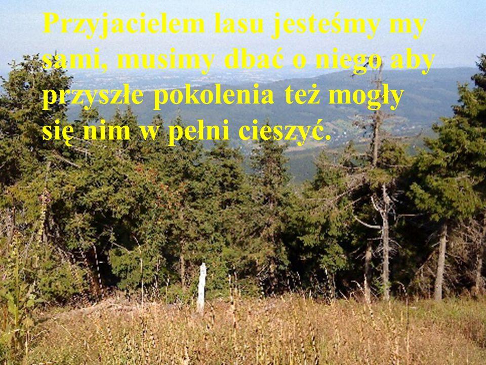 Przyjacielem lasu jesteśmy my sami, musimy dbać o niego aby przyszłe pokolenia też mogły się nim w pełni cieszyć.