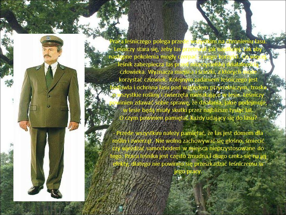 Praca leśniczego polega przede wszystkim na chronieniu lasu