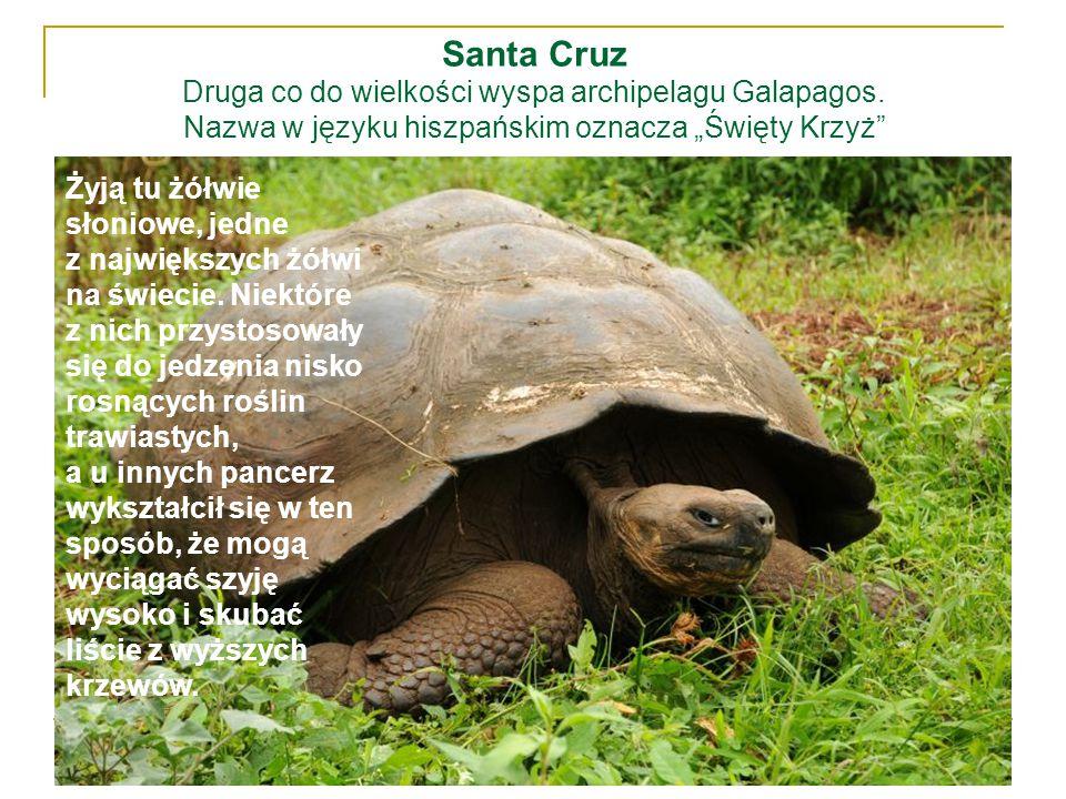 Santa Cruz Druga co do wielkości wyspa archipelagu Galapagos