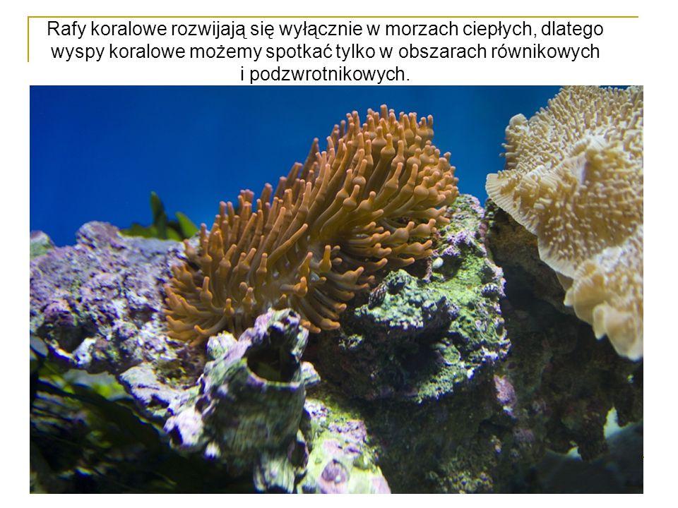 Rafy koralowe rozwijają się wyłącznie w morzach ciepłych, dlatego wyspy koralowe możemy spotkać tylko w obszarach równikowych i podzwrotnikowych.