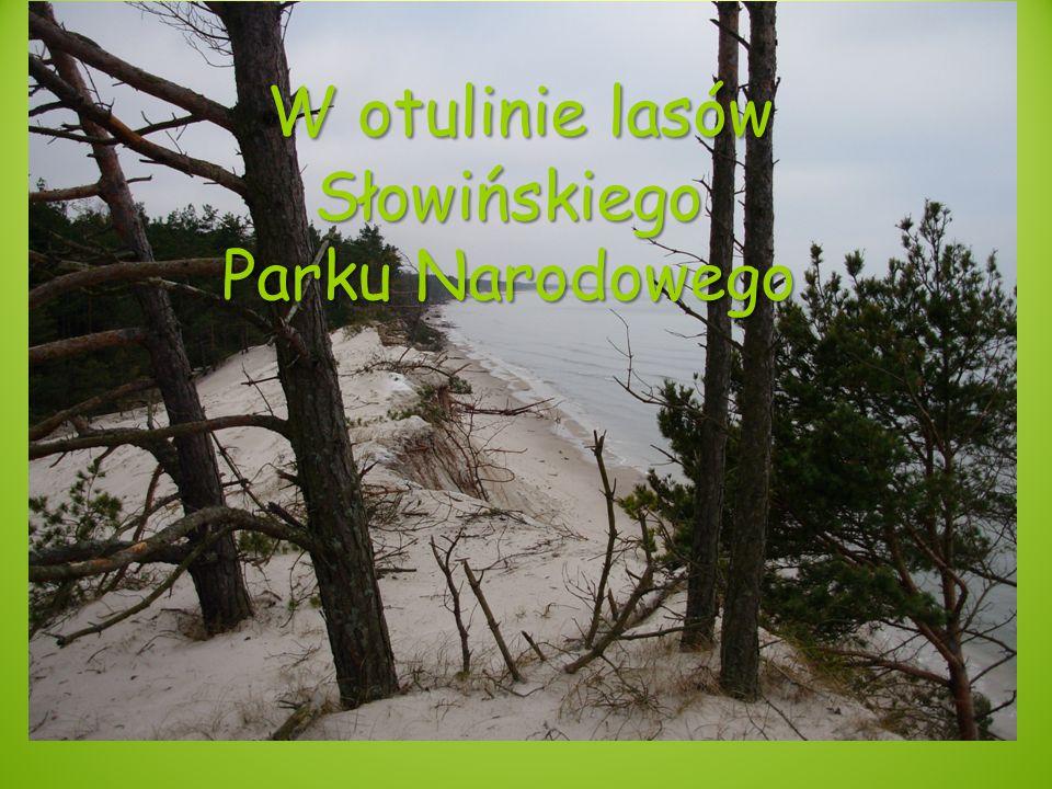 W otulinie lasów Słowińskiego