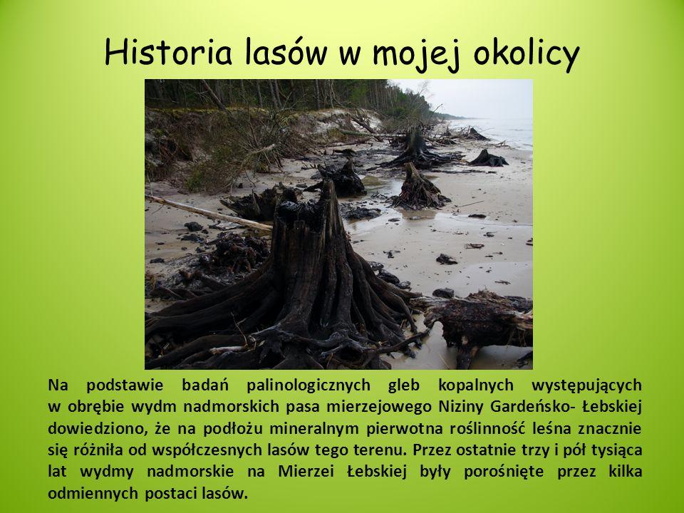 Historia lasów w mojej okolicy