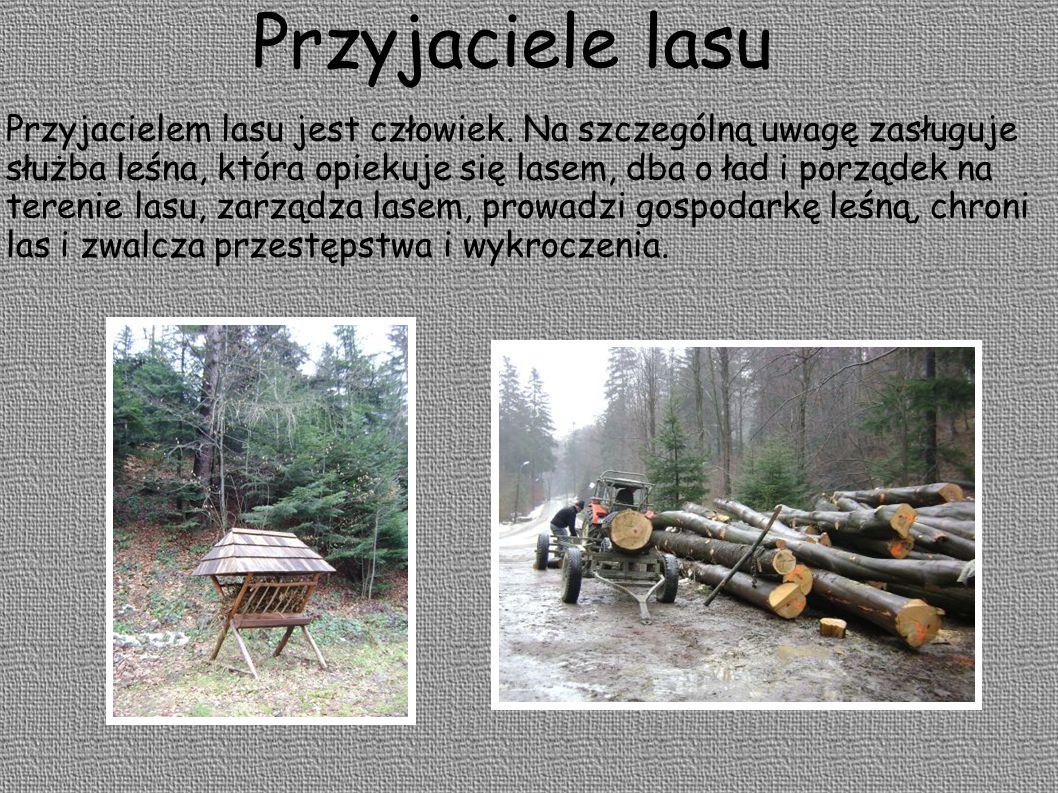 Przyjaciele lasu