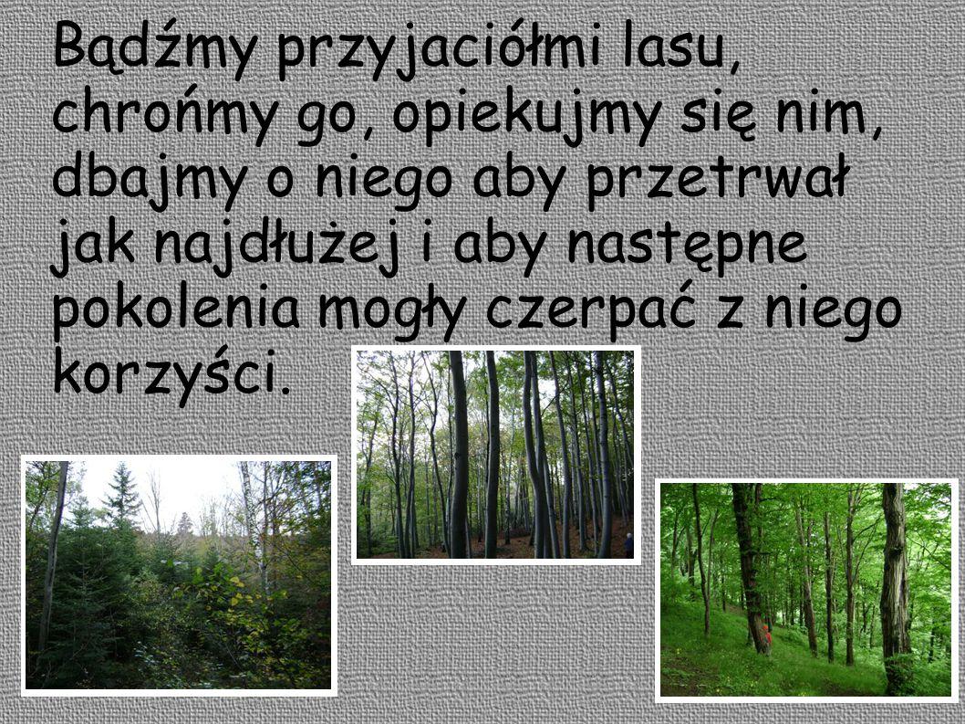 Bądźmy przyjaciółmi lasu, chrońmy go, opiekujmy się nim, dbajmy o niego aby przetrwał jak najdłużej i aby następne pokolenia mogły czerpać z niego korzyści.