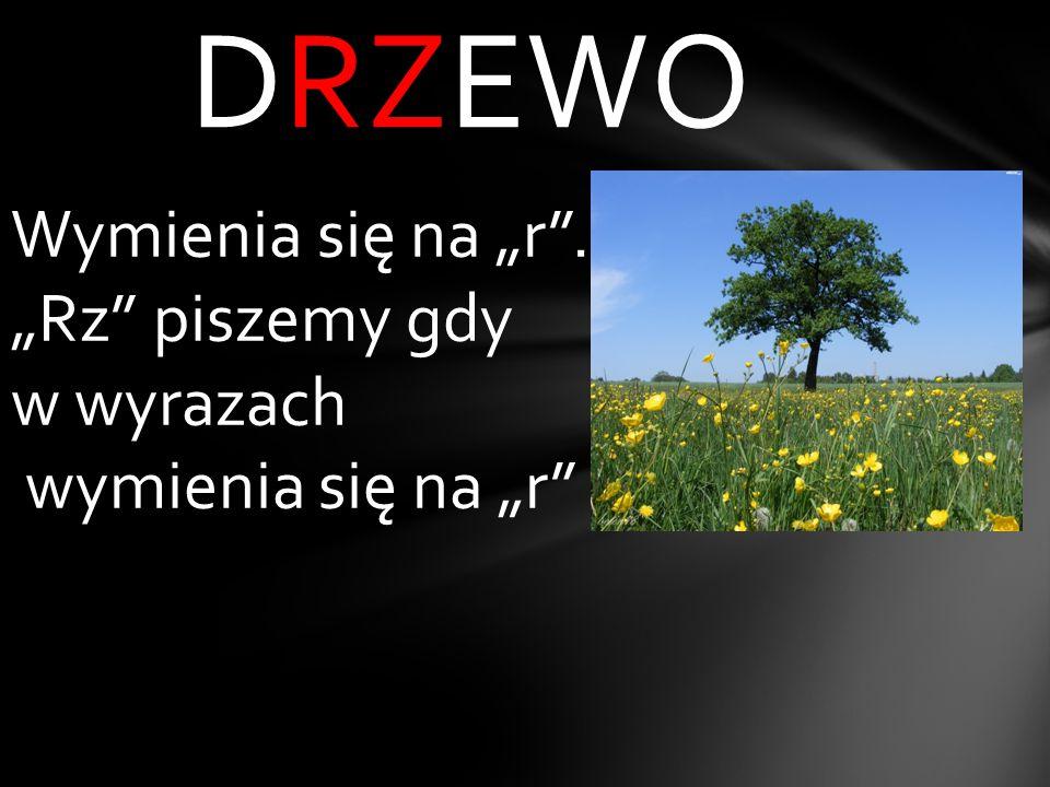 """DRZEWO Wymienia się na """"r . """"Rz piszemy gdy w wyrazach"""