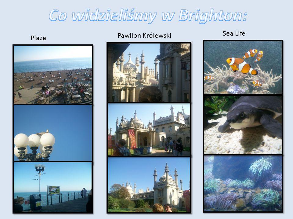 Co widzieliśmy w Brighton: